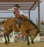 Rodeo-139